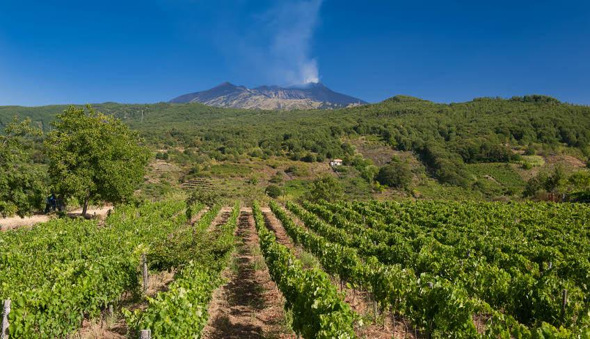 Vini dell'Etna Monte Gorna
