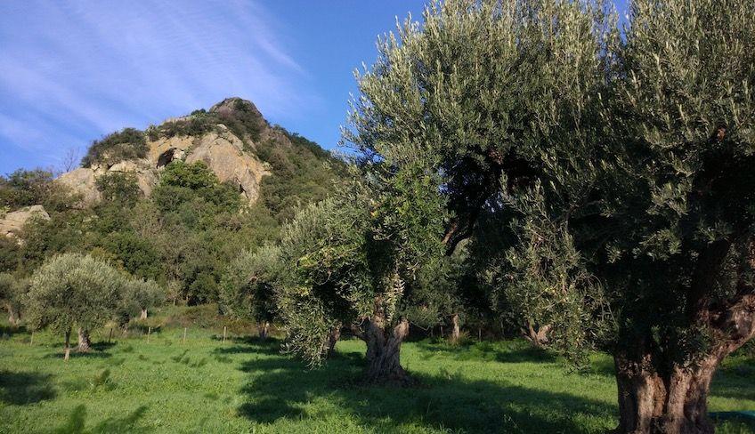 Alcantara Gorge tour -