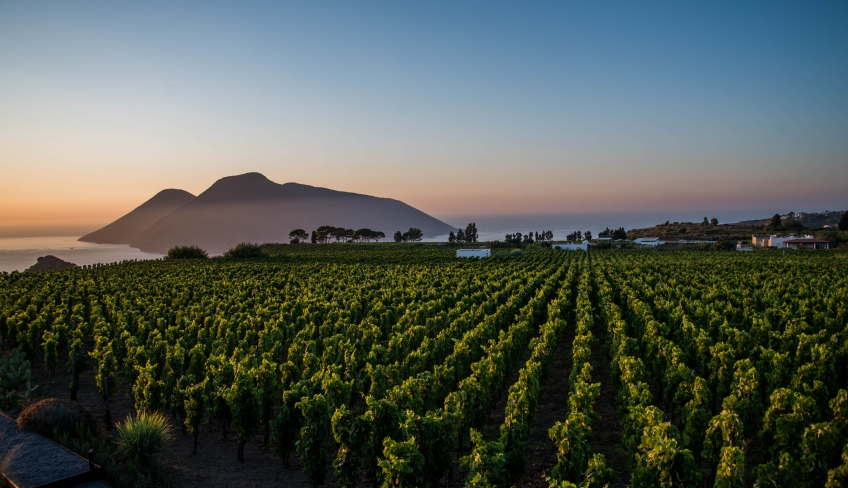 Lipari vista vigne