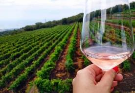 mount etna wine tasting