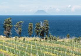Wine Tasting Sicily - vino faro doc