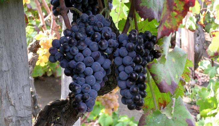 Cellars & Wineyards Holiday in Sicily -Dinner Etna