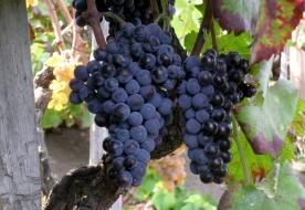 Dinner Etna - wine tasting sicily