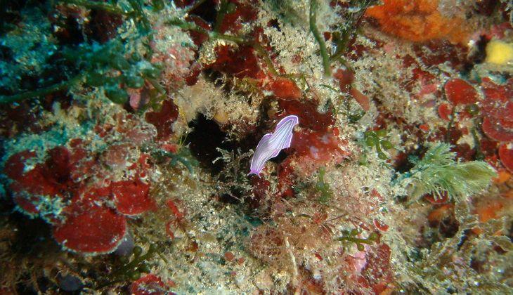 Snorkeling Sicilia - sicily sport gift ideas