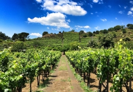 Cellar Etna - wine sicily tradition