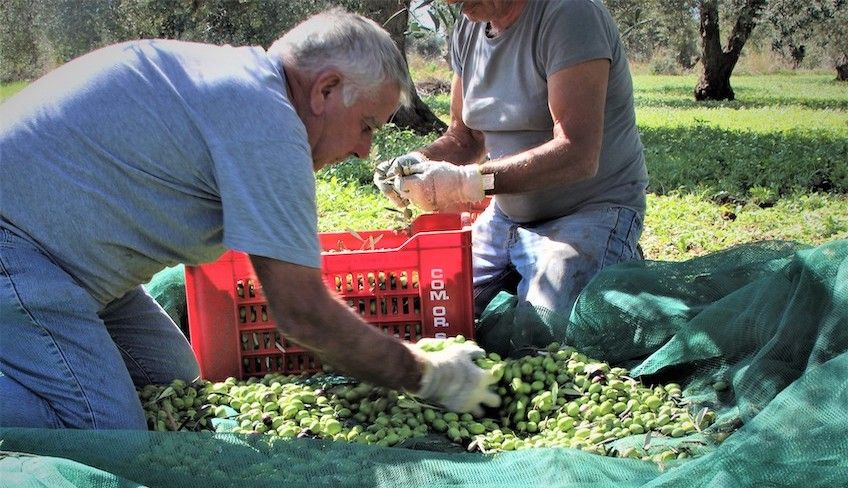 Dinner Ragusa - local farm produce