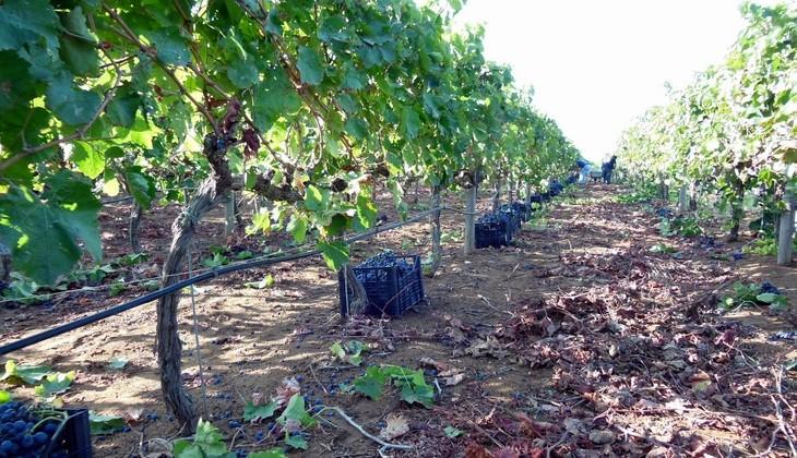 Cellar Ragusa - wine spectator sicily