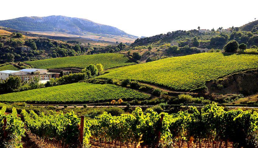wine tasting Palermo -