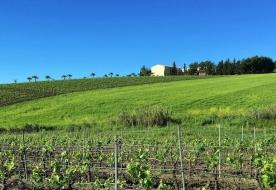 wine country tours sicilian wine learn wine tasting San Cipirello
