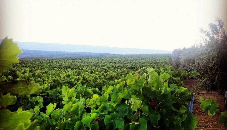 Dinner Ragusa - wine tasting experience