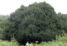 Sicilian park - parco madonie itinerari