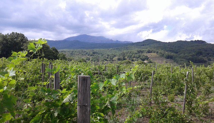 Wine tasting etna - etna wine tour