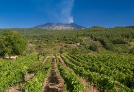 Wine tasting etna etna wine tour etna wine tasting