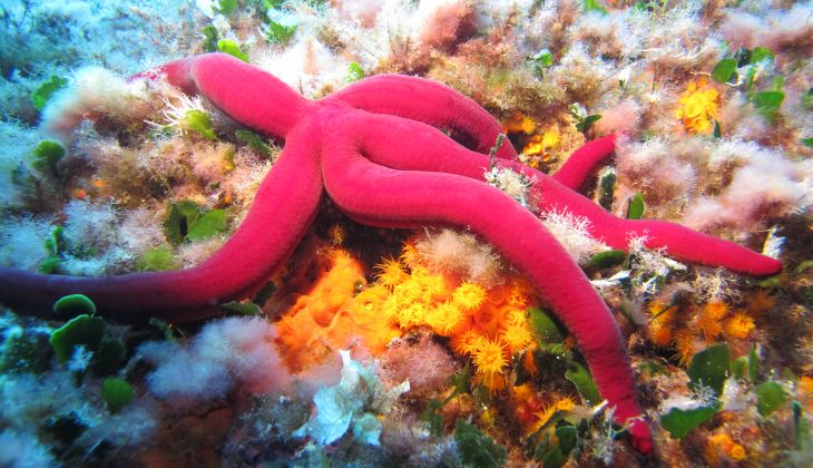 Diving - Snorkeling