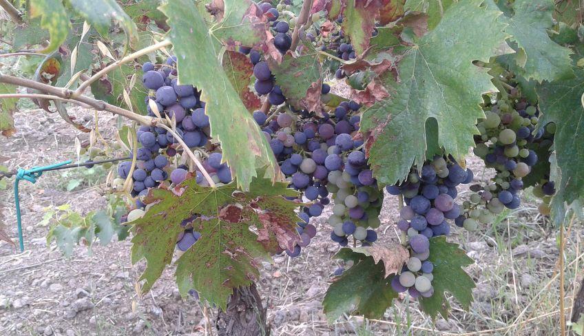 Etna wine tasting - Etna Wine