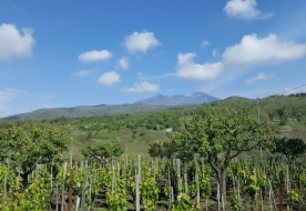 Etna wine tasting Etna Wine Etna wine tour
