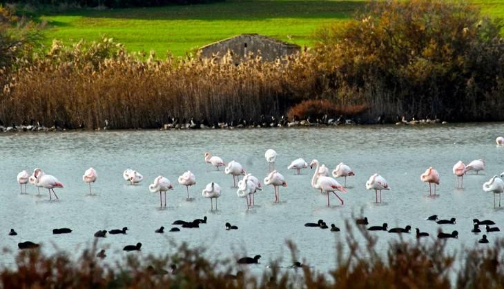 Birdwatching  - excursion Sicily