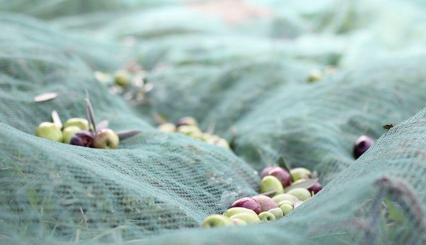 best sicilian olive oil -